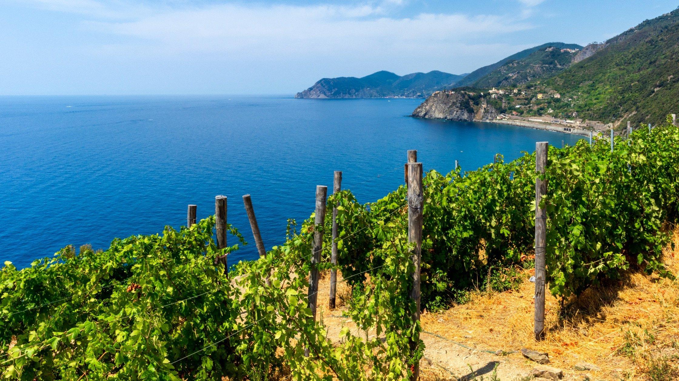 Wine Making Cinque Terre