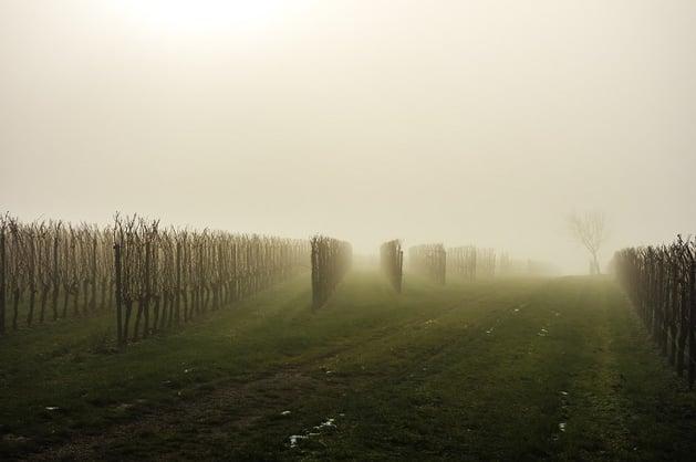 vineyard-fog-emilia-romagna-region.jpg