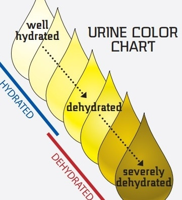 Normal-Urine-Color-Chart-Template-342098-edited.jpg