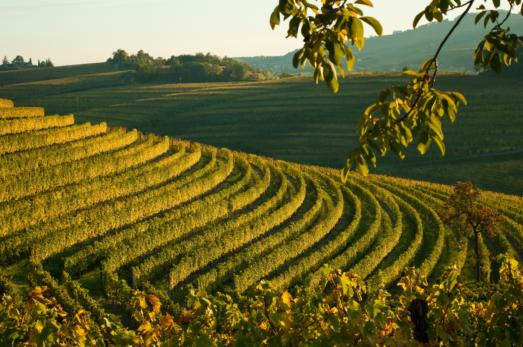 Collio Friuli.jpg