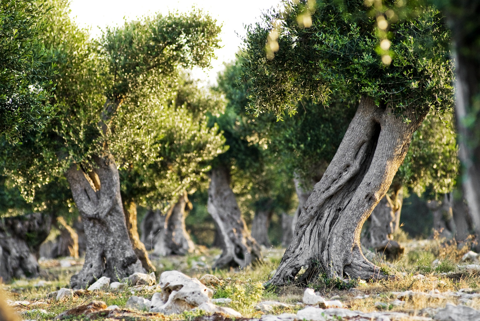 Puglia_Matera_Tourissimo_12.jpg