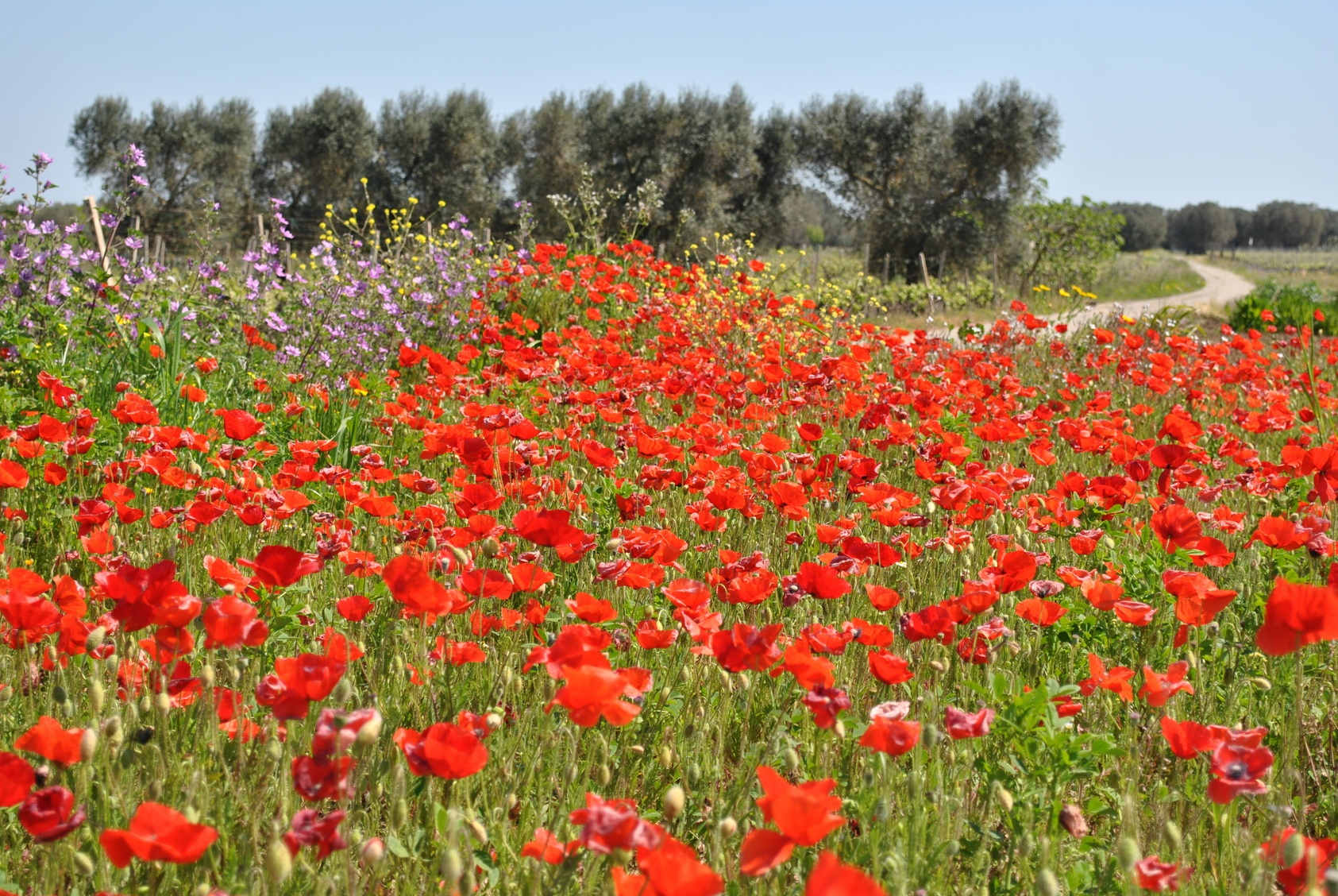 Puglia_Matera_Tourissimo_5.jpg