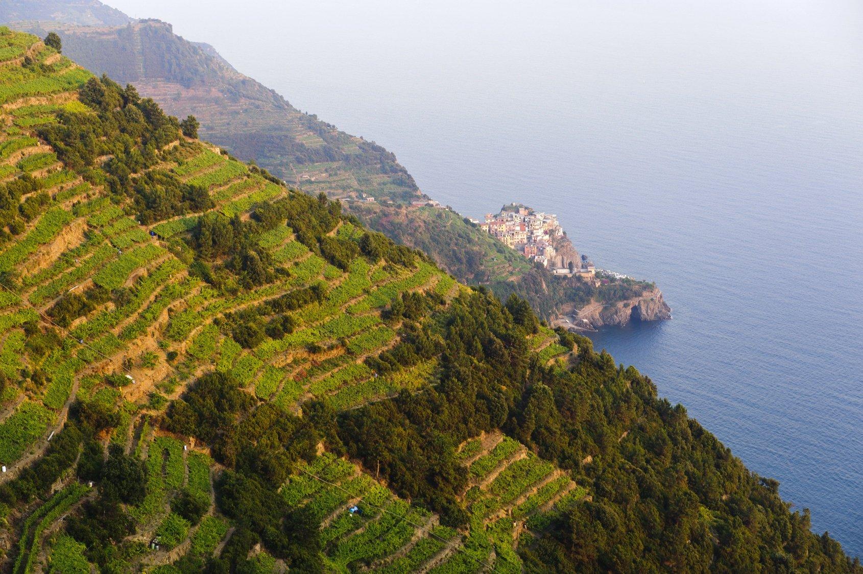 cinque_terre_vineyards.jpg